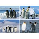Reuzewenskaarten serie 12073 - Pinguins