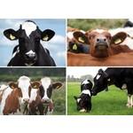 Reuzewenskaart met koeienafbeelding