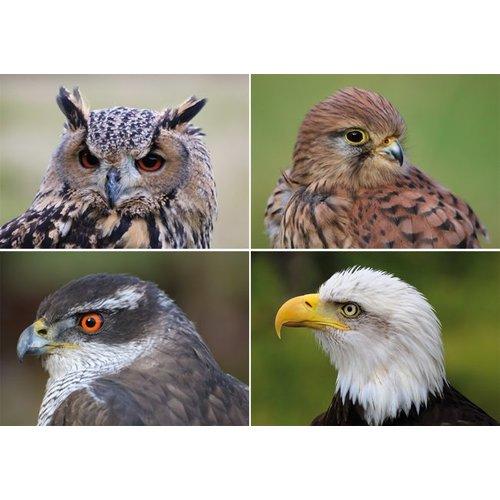Reuzewenskaart serie 11014 Roofvogels