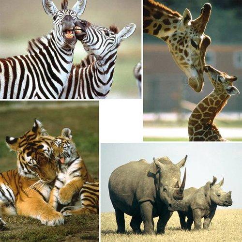 Reuzewenskaart serie 11095 - wilde dieren