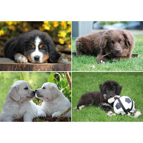 Reuzewenskaart serie 12081 - jonge hondjes