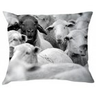 BLOOMINGVILLE BLACK SHEEP PILLOW (incl. filling)