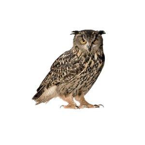 KEK AMSTERDAM OWL XL WALL STICKER