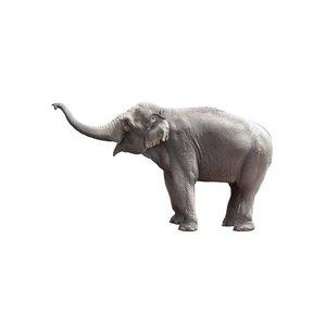 KEK AMSTERDAM ELEPHANT XL WALL STICKER