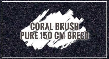 Coral Brush Pure 150 cm breed