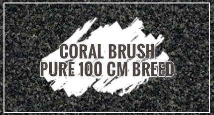 Coral Brush Pure 100 cm breed