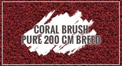 Coral Brush Pure 200 cm breed