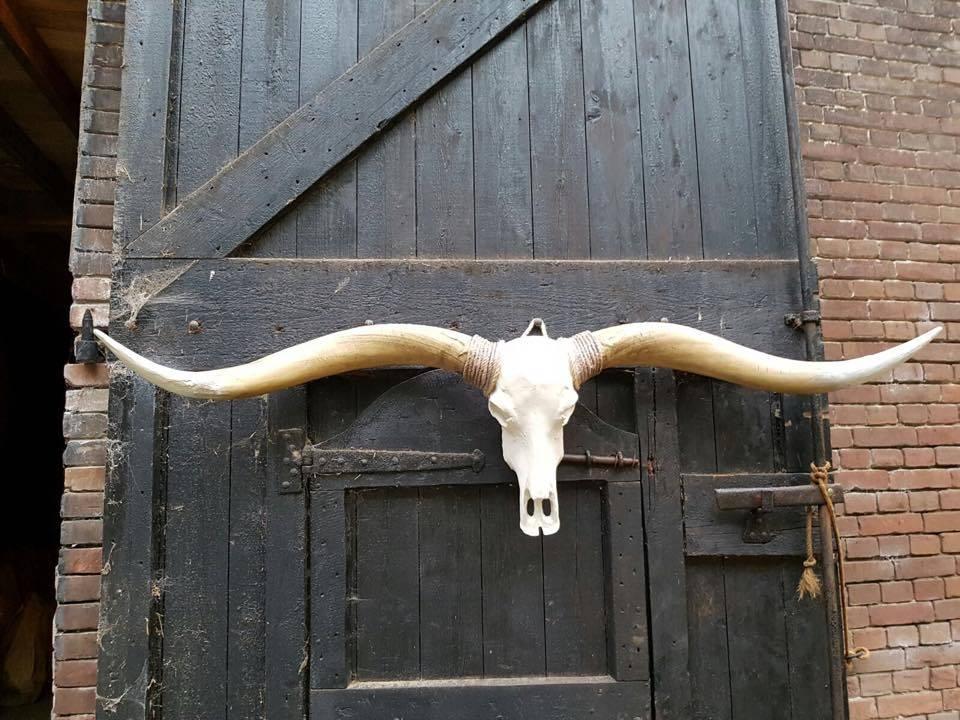 Damn Long Horn brown horns white point