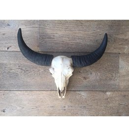 Damn Skull effen 40 x 34 cm