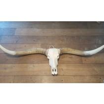 Damn Longhoorn bruine hoorns witte punt
