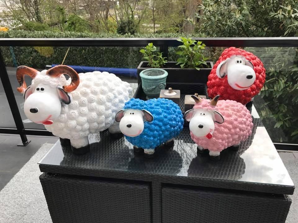 large sheep
