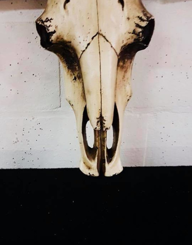 Damn Longhoorn 92 cm breed