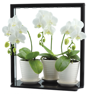 Grow orchids or herbs in your Kitchen