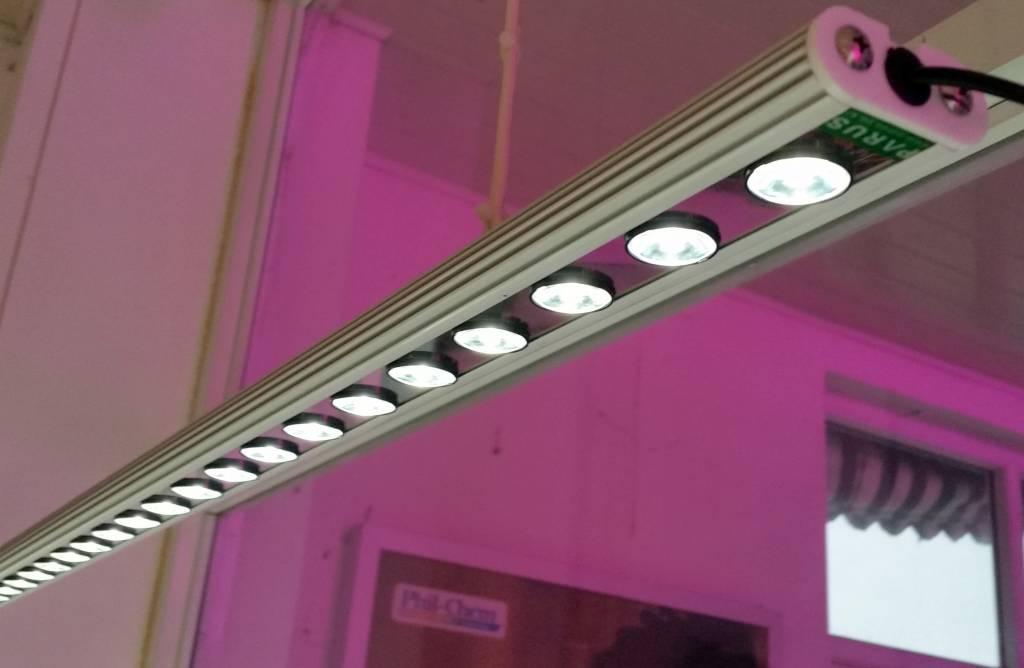 http://static.webshopapp.com/shops/027306/files/061545368/parus-plant-light-vensterbank-of-kantoor-verlichti.jpg