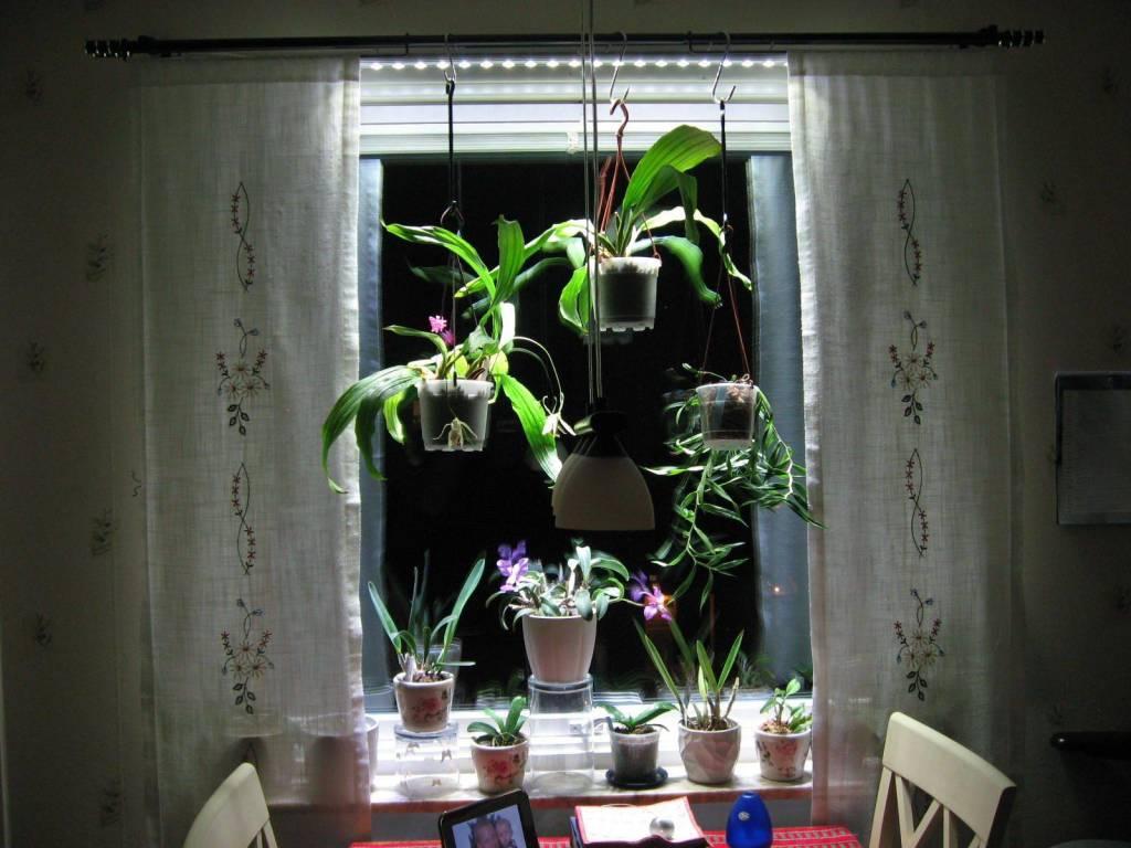 http://static.webshopapp.com/shops/027306/files/061545372/parus-plant-light-vensterbank-of-kantoor-verlichti.jpg