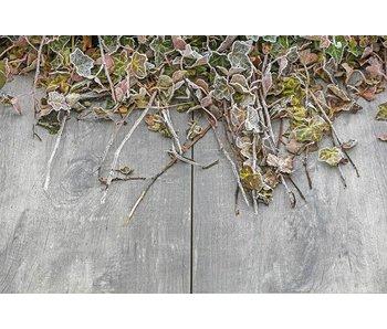 GeoCeramica Timber Grigio 30x60x4cm