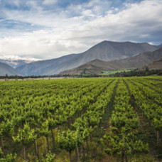 Chileense wijn