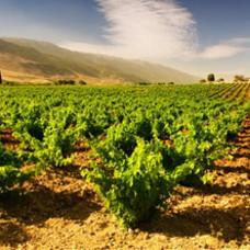 Libanese wijn