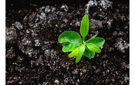 Tipps und Fakten rund um die Verwertung der Einstreu