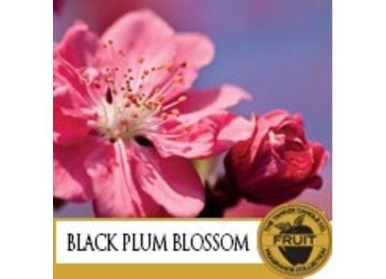 Black Plum Blossom