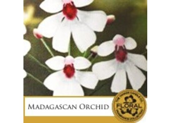 Madagascan Orchid