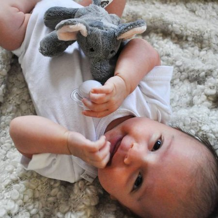 Paciboo Paciboo Olifant