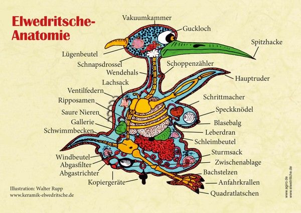 Poster Elwedritsche Anatomie - Pfaelzisch.com (Dubbeglas Shop)