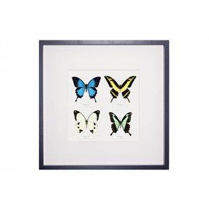 4 vlinders in lijst
