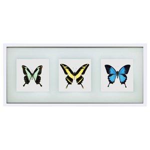 Papilio trio