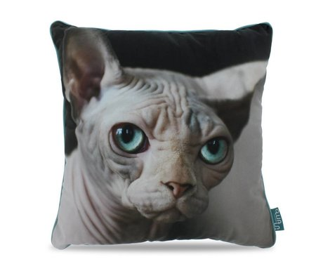 Intimo collection Sierkussen Naked cat grijs zwart turquoise polyester 45x45cm