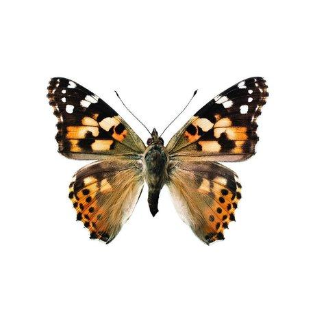 KEK Amsterdam Muursticker vlinder Butterfly 953 bruin wit 17x12cm