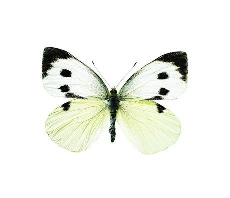 KEK Amsterdam Muursticker vlinder Butterfly 956 wit bruin grijs 17x12cm