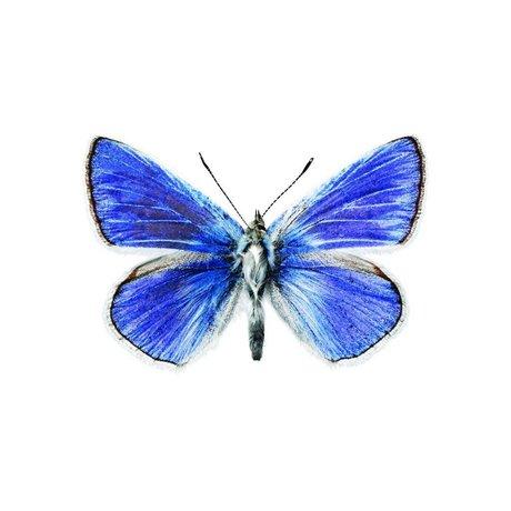 KEK Amsterdam Muursticker vlinder Butterfly 959 blauw 17x11cm