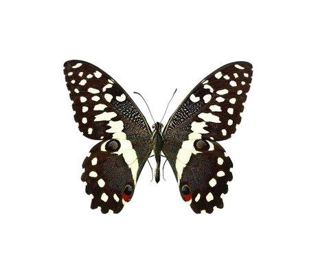 KEK Amsterdam Muursticker vlinder Butterfly 958 bruin wit 16x13cm