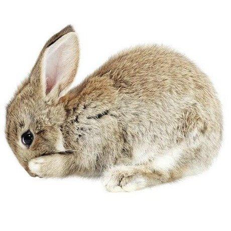 KEK Amsterdam Muursticker Baby Rabbit bruin 13x10cm