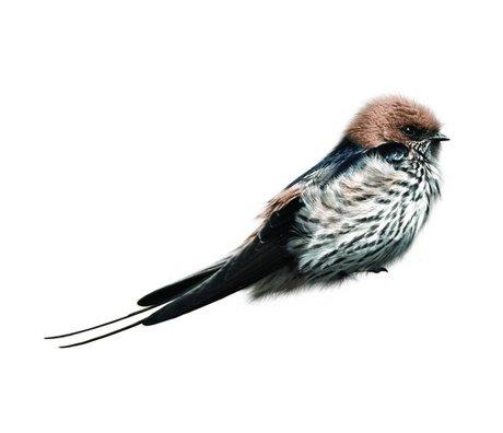 KEK Amsterdam Muursticker Swallow 17x6cm, Vogel collectie