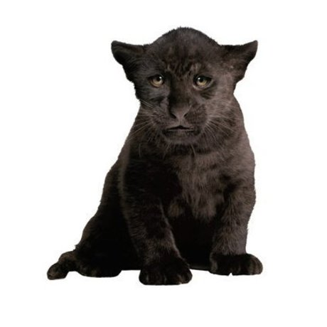 KEK Amsterdam Muursticker panter zwart vinyl 29x35cm, Safari Friends Black Panther