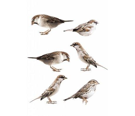 KEK Amsterdam Muursticker set van 6 15x7cm Forest Friends Sparrows muurfolie