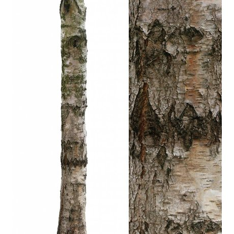 KEK Amsterdam Muursticker boomstam 'Home tree 4' bruin/groen 28x260cm vinyl