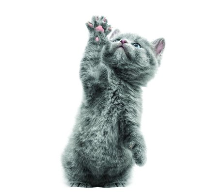 KEK Amsterdam Muursticker kitten Morris grijs 13x22cm