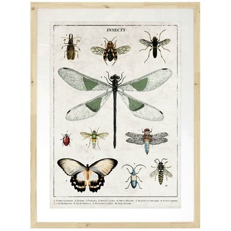 HK-living Fotolijst insecten kunst frame bruin hout passe-partout en kunst afdruk 86x111cm