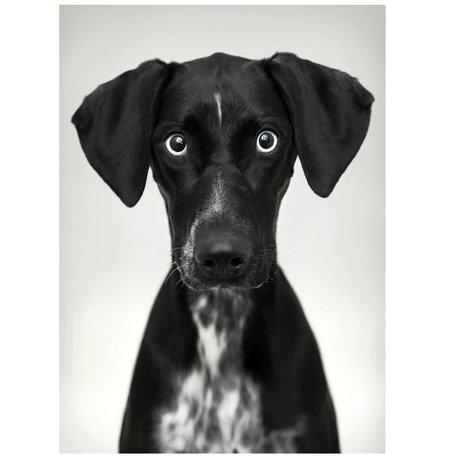 HK-living Schilderij / fotobord 'Hond' op plexibond 80x110cm
