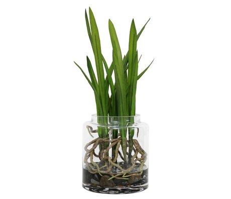 HK-living Decoratie gewortelde cymbidium orchideeën vaas 35cm