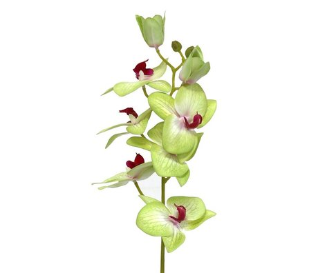 HK-living Decoratie orchideeën tak 71cm