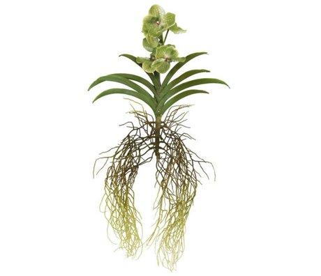 HK-living Decoratie gewortelde vanda orchidee 92cm