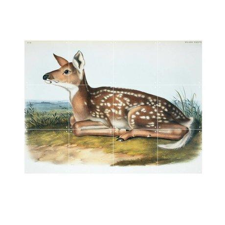 IXXI Wanddecoratie Audubon & Bachman White-tailed deer multicolour papier S 80x60cm