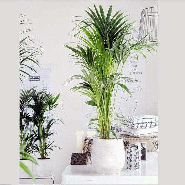 Buitenplanten amp Terrasplanten  Online Kopen  Fleurdirect
