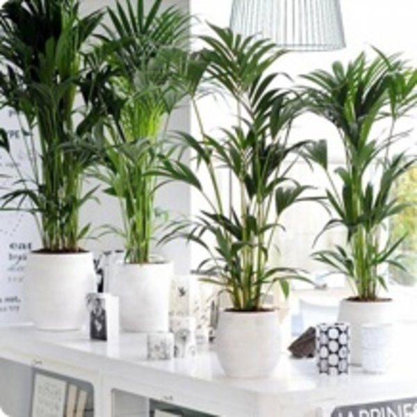 kamerplanten kopen compleet assortiment fleurdirect. Black Bedroom Furniture Sets. Home Design Ideas