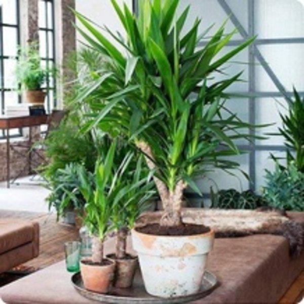 Kamerplanten kopen compleet assortiment fleurdirect for Grote kamerplanten