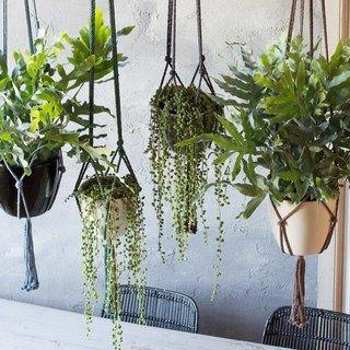 Kamerplanten kopen compleet assortiment fleurdirect for Schilderij buiten intratuin